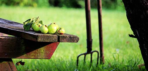 Jardinier pour effectuer tous les travaux de jardinage ans votre propriété